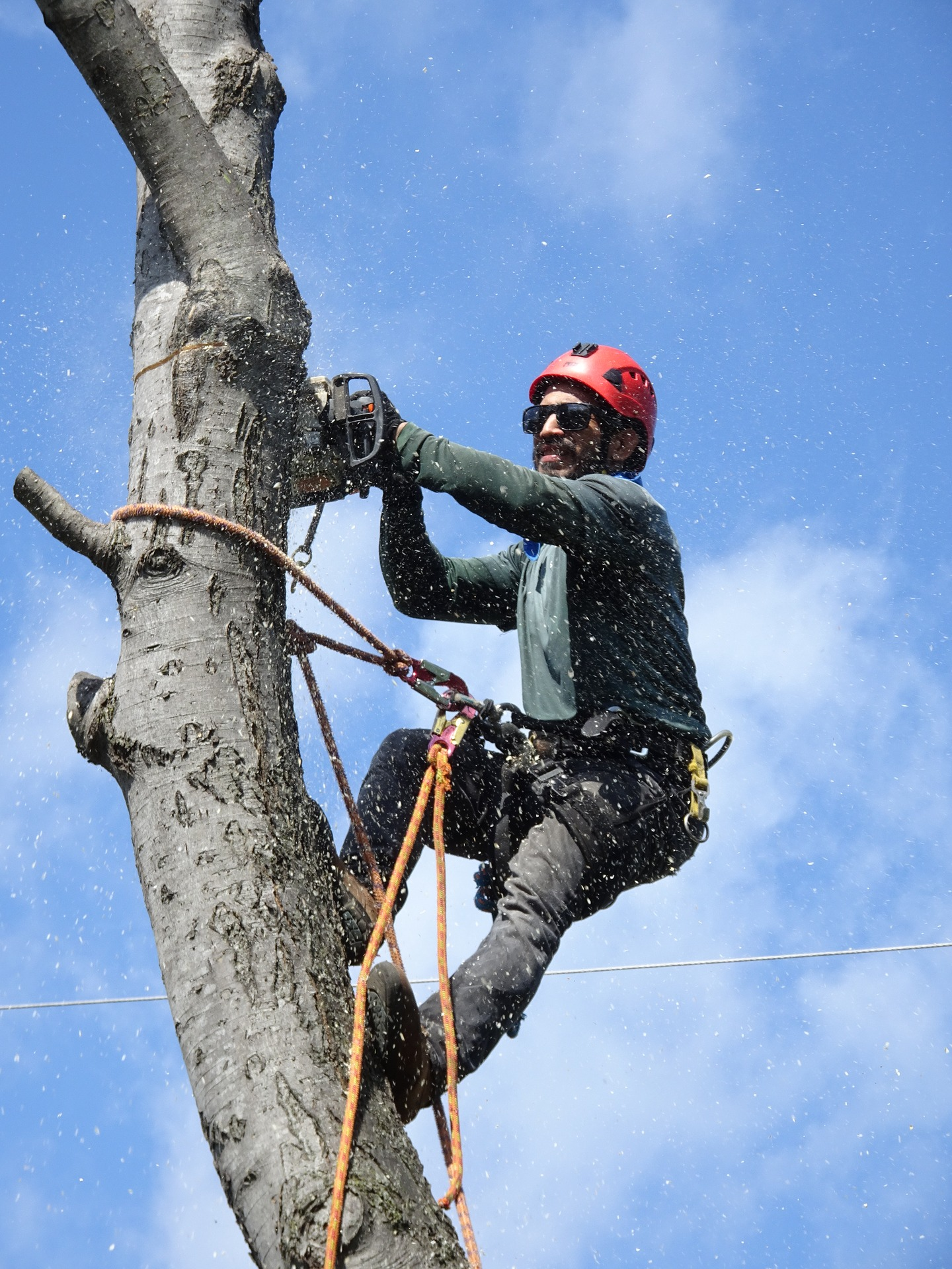 tree cutter cutting tree removal tulsa oklahoma trees removed