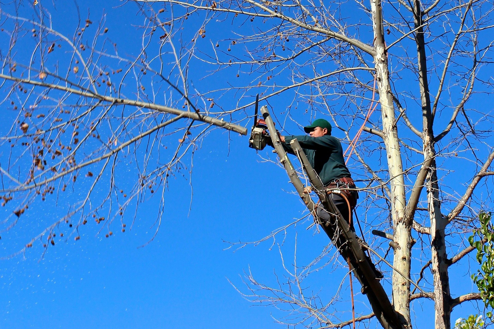 tree trimming pruning best customer service top rated in tulsa