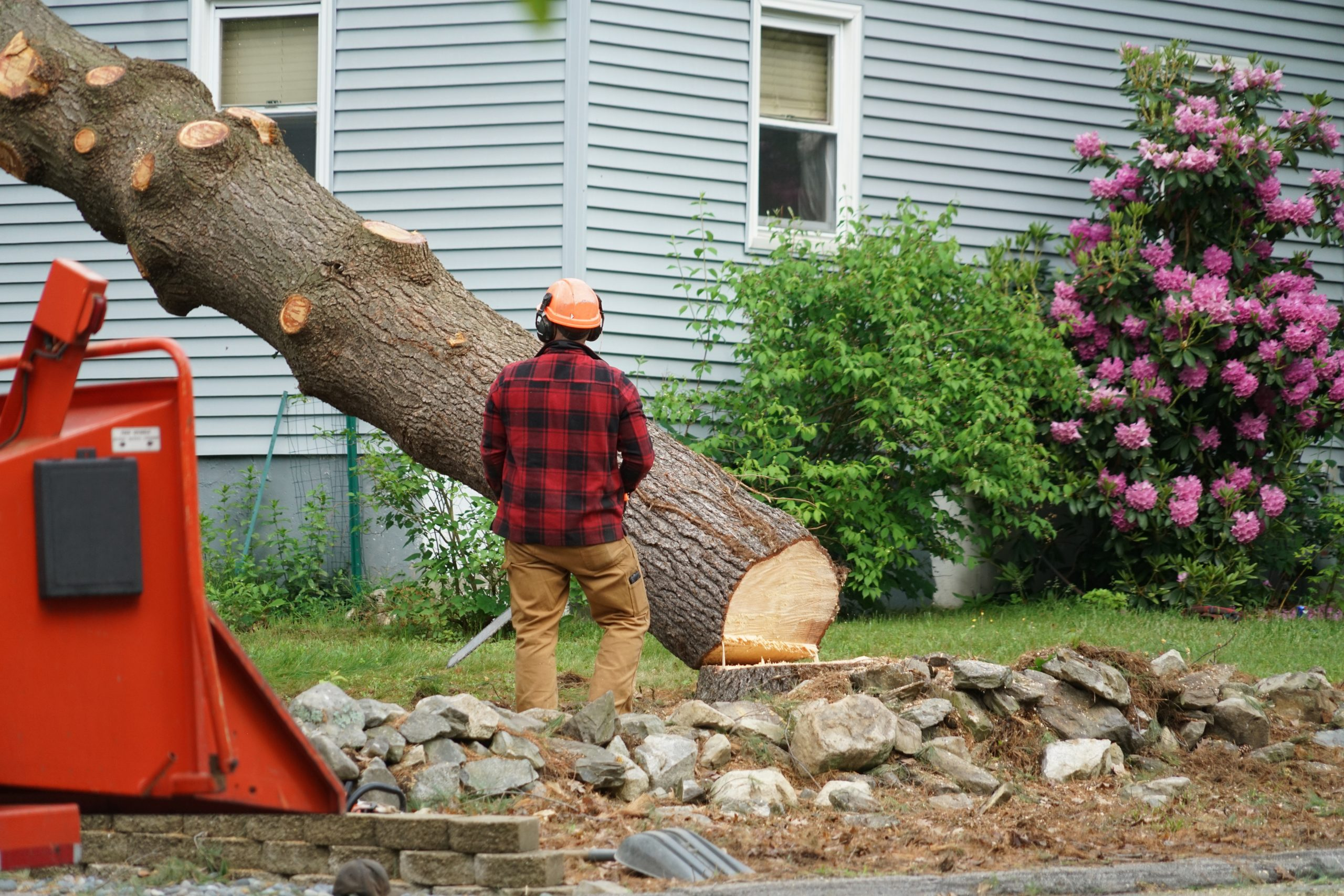 tree removal trees removed best tree service tulsa