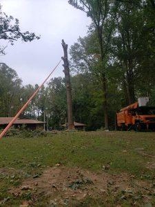 tree service coweta oklahoma coweta ok