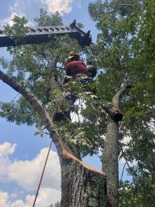 tree trimming catoosa oklahoma professional tree service catoosa ok