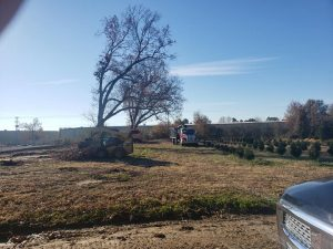 best tree service Collinsville oklahoma tree trimming trees removed collinsville ok