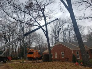 best tree service company broken arrow oklahoma trees removed tree trimming tree pruning tree company broken arrow oklahoma