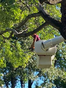 tree service near sand springs oklahoma excellent tree company trimming removal pruning stump grinding sand springs oklahoma